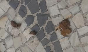 cocô na parai de icaraí 30-11-2014